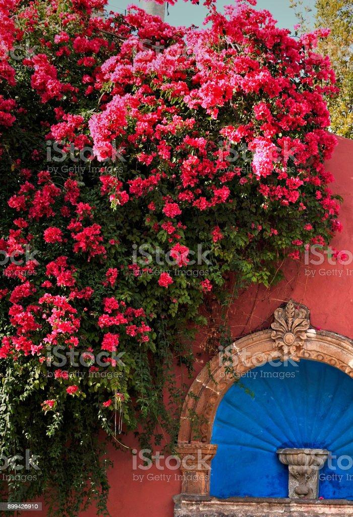 San Miguel de Allende, GTO, Mexico - August 25, 2015: San Miguel Bougainvilela stock photo
