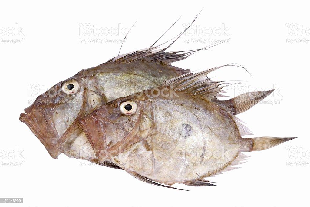 San Pierre Fish royalty-free stock photo