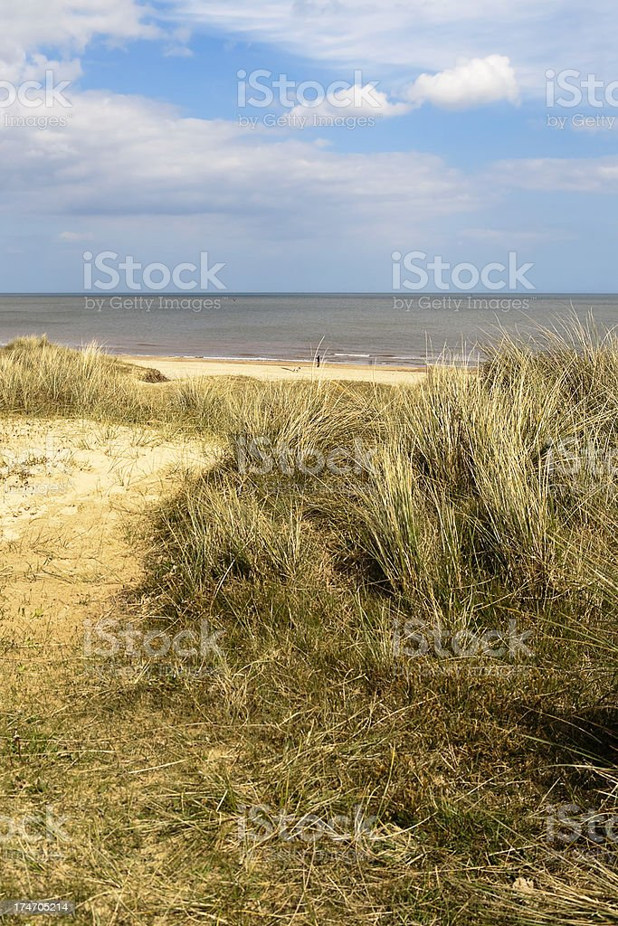 sand and brush on beach shore royalty-free stock photo
