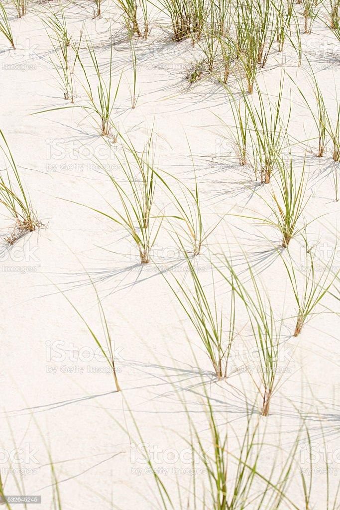 Sand and marram grass stock photo