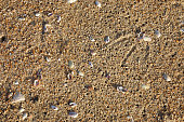 Summer seashore close up with sand, pebbles, shells and seagull prints