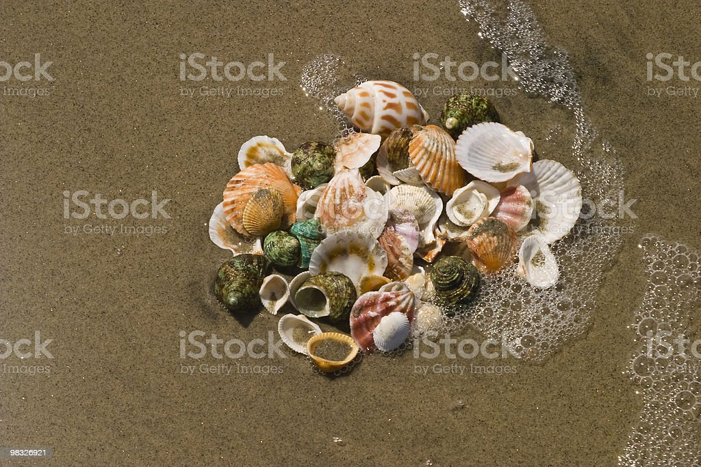 Sand and Surf Wash Over Shells, Sea-Life, Shellfish, Ocean royalty-free stock photo