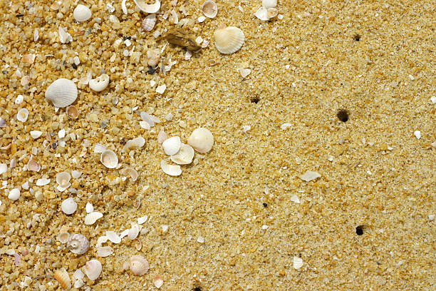 Sand at the beach with shells stock photo