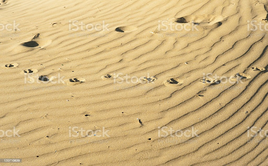 Sand background stock photo