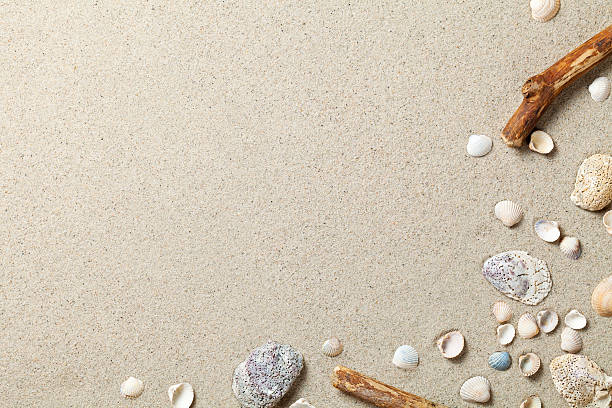 sand background - animal shell stock pictures, royalty-free photos & images