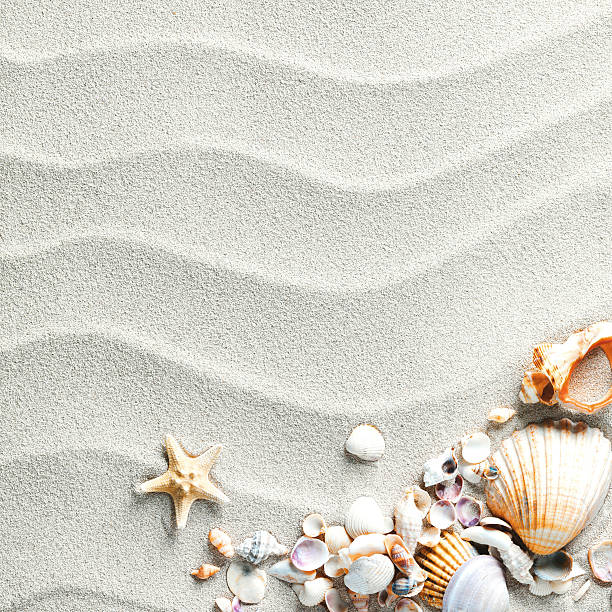 sand background with shells and starfish - animal shell stock pictures, royalty-free photos & images