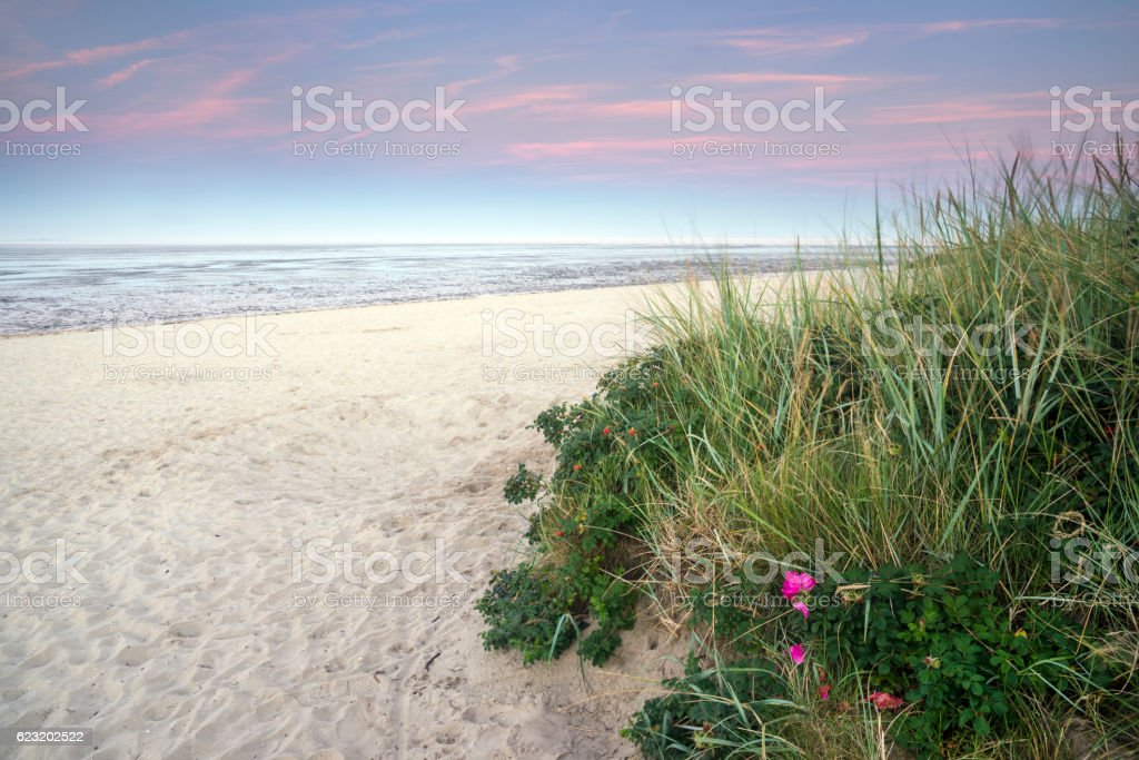 Sand beach and wadden sea at dusk stock photo