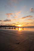 La Jolla, San Diego - Beach at sunset, sand in focus with beautiful sunset in ocean sky