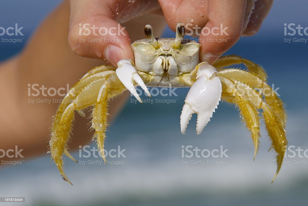 Sand crab in hand royalty-free stock photo