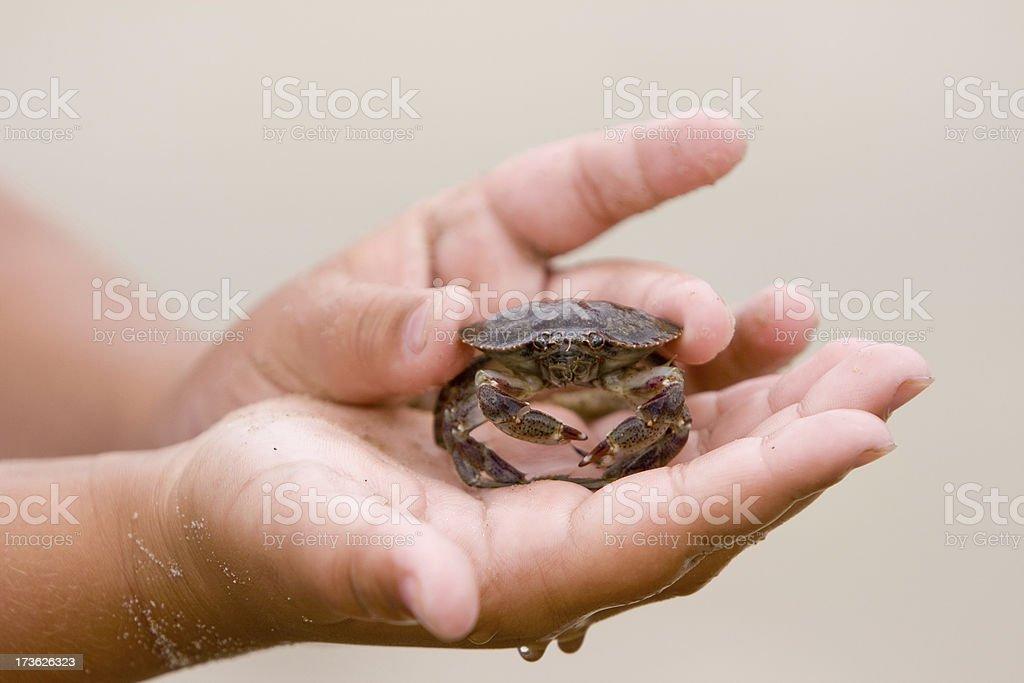 Sand Crab stock photo