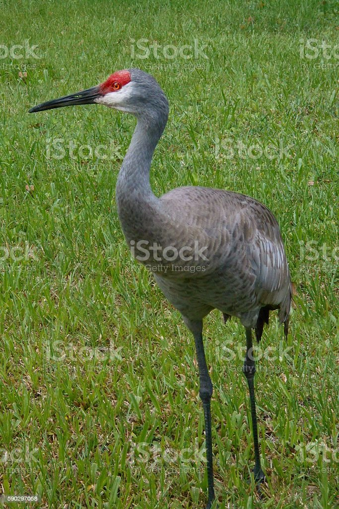 Sand crane royaltyfri bildbanksbilder
