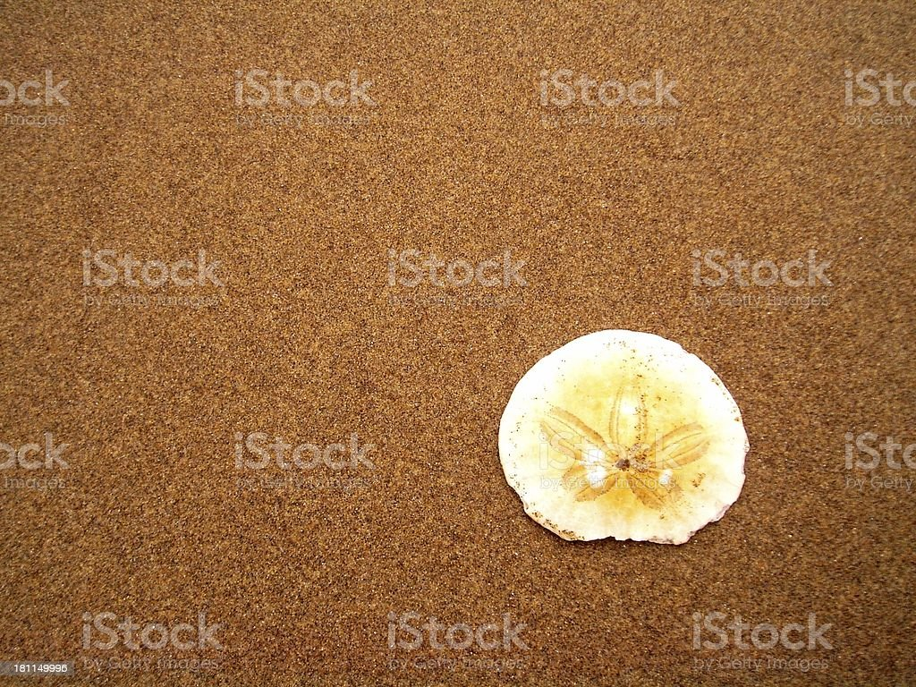 Sand Dollar On the Beach royalty-free stock photo