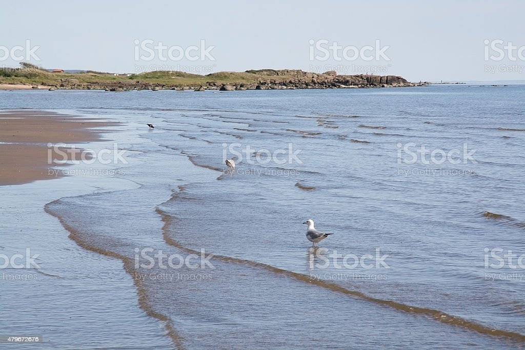 Sand dune and bird life - Royaltyfri 2015 Bildbanksbilder