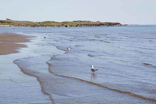 sand dune and bird life - sand dune sweden bildbanksfoton och bilder