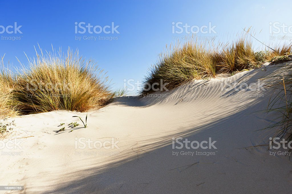Sand dune und Gras gegen blauen Himmel – Foto