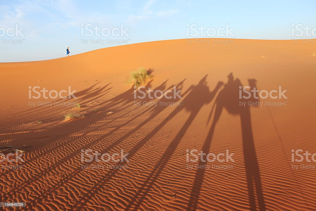 Sand dune, camels and berber boy in desert, Morocco, Africa royalty-free stock photo