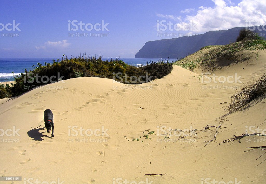Sand Dune Doggie royalty-free stock photo