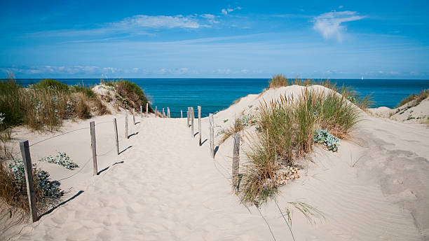 sand dune - france - atlantic ocean stock pictures, royalty-free photos & images