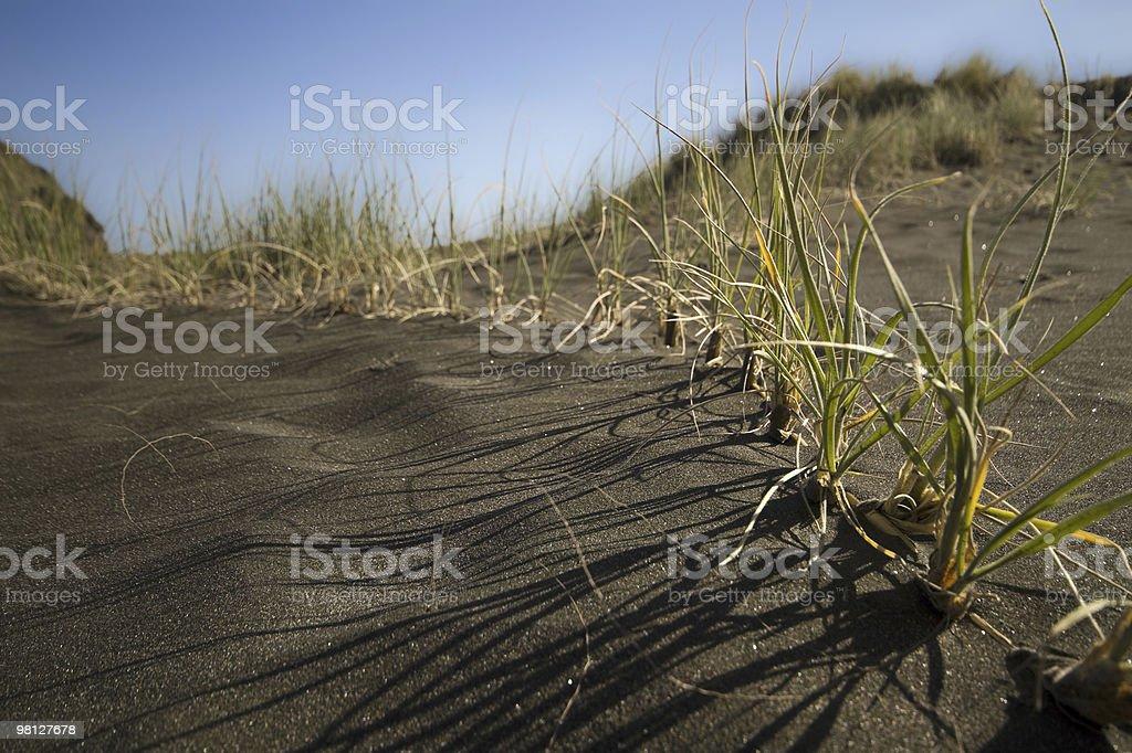 Erba di duna di sabbia foto stock royalty-free