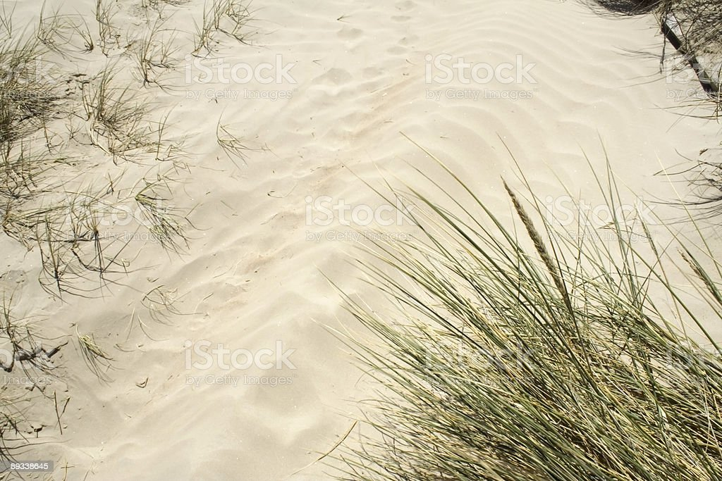 Sand dune grasses stock photo