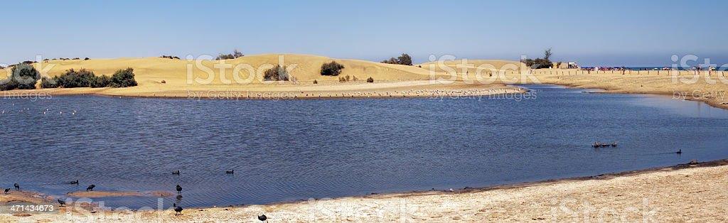 Sand Dune of Maspalomas and lake La Charca (Gran Canaria) stock photo