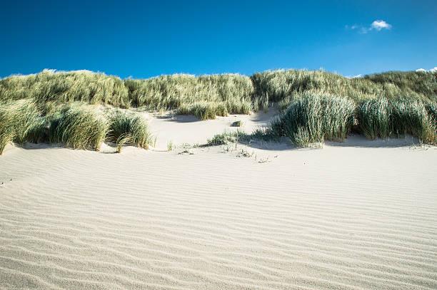 sand dune - sylt urlaub stock-fotos und bilder