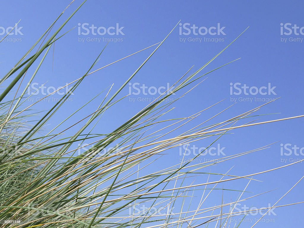 Sand Dune royalty-free stock photo