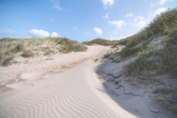 sanddyn som formats av vinden - sand dune sweden bildbanksfoton och bilder