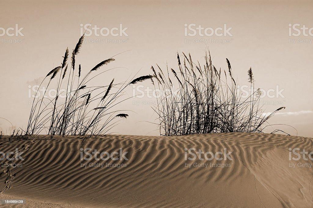 Sand Dune Sunrise royalty-free stock photo