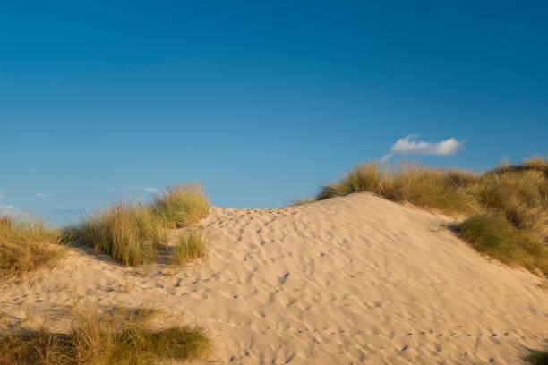 sanddyn med någon gräs - sand dune sweden bildbanksfoton och bilder