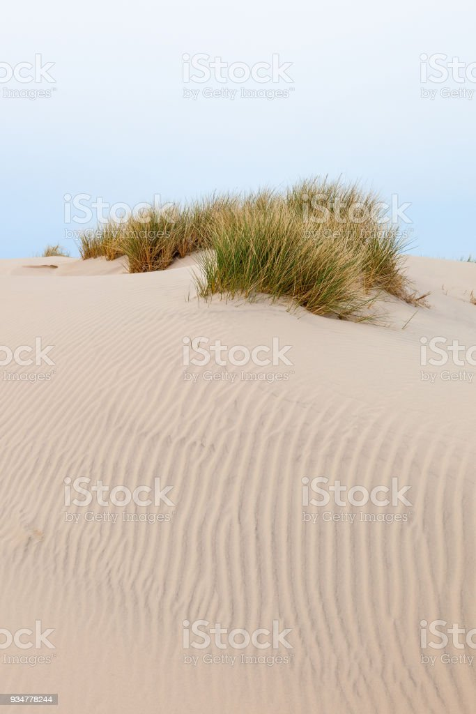 Sand dune with tuft of grass stock photo