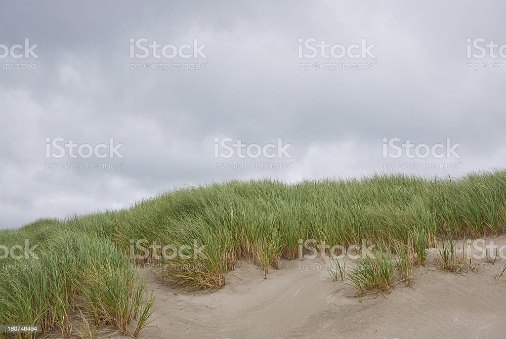 Sand Dunes and Grass - Royalty-free Beach Stock Photo