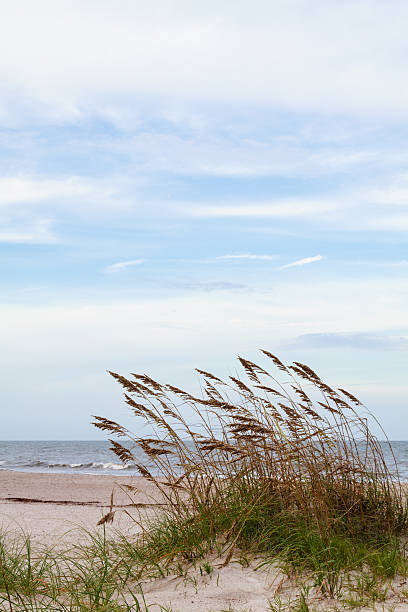Sand Dunes and Sea Oats stock photo