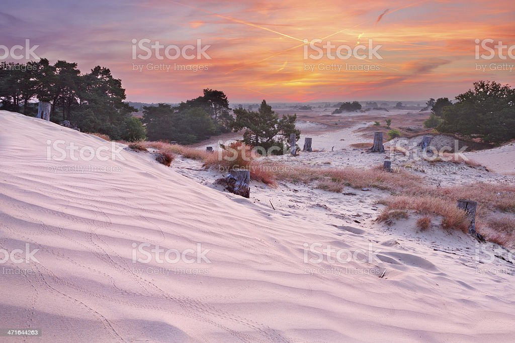 Sand dunes at sunrise in Kootwijkerzand, The Netherlands royalty-free stock photo