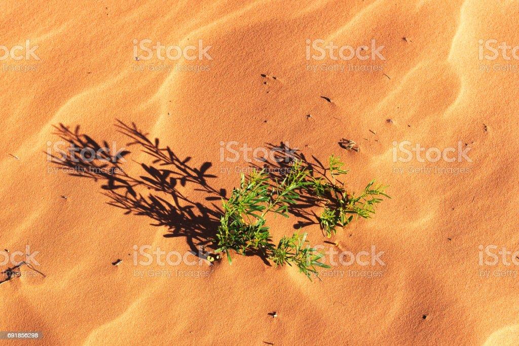Sand dunes background stock photo
