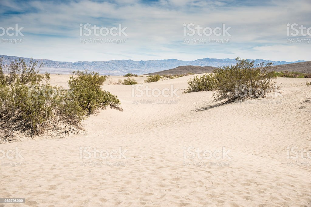 sand dunes desert in the death valley stock photo