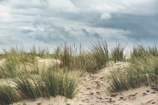 Sand dunes grasses in cornwall - UK