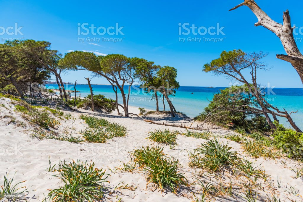 Sand dunes in Maria Pia beach royalty-free stock photo