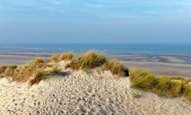sand dunes in Picardy coast Fort Mahon beach in Picardy coast hauts de france stock pictures, royalty-free photos & images