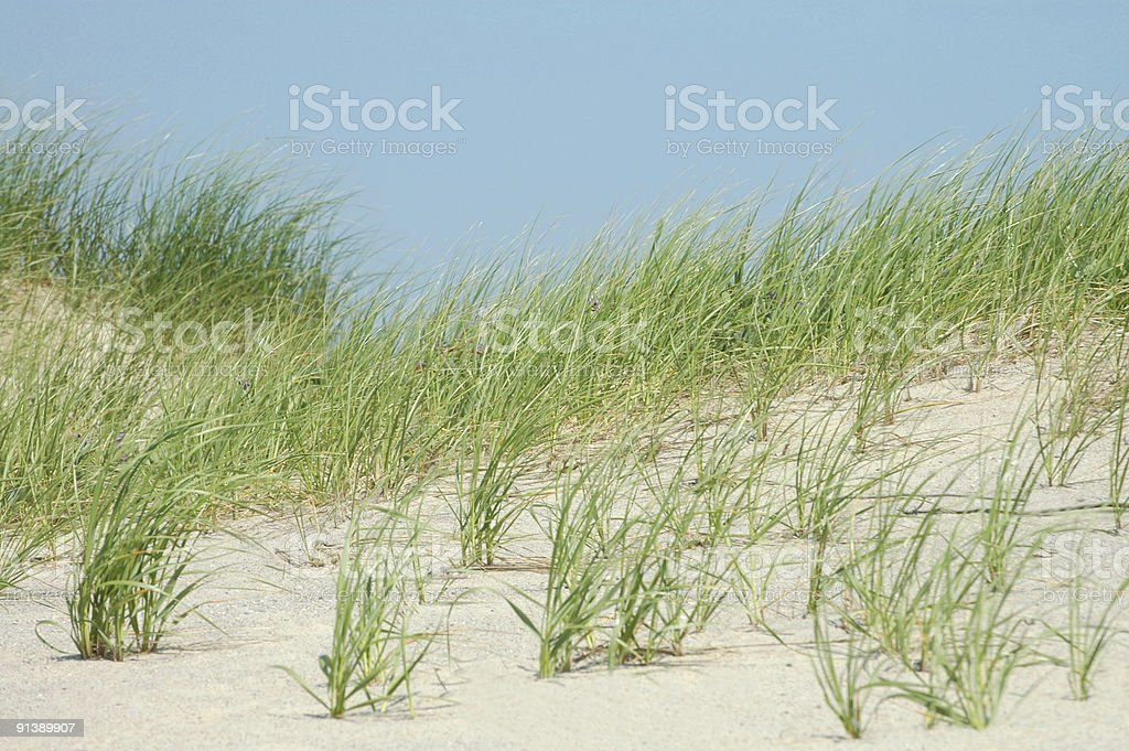 Sand dunes in the breeze royalty-free stock photo