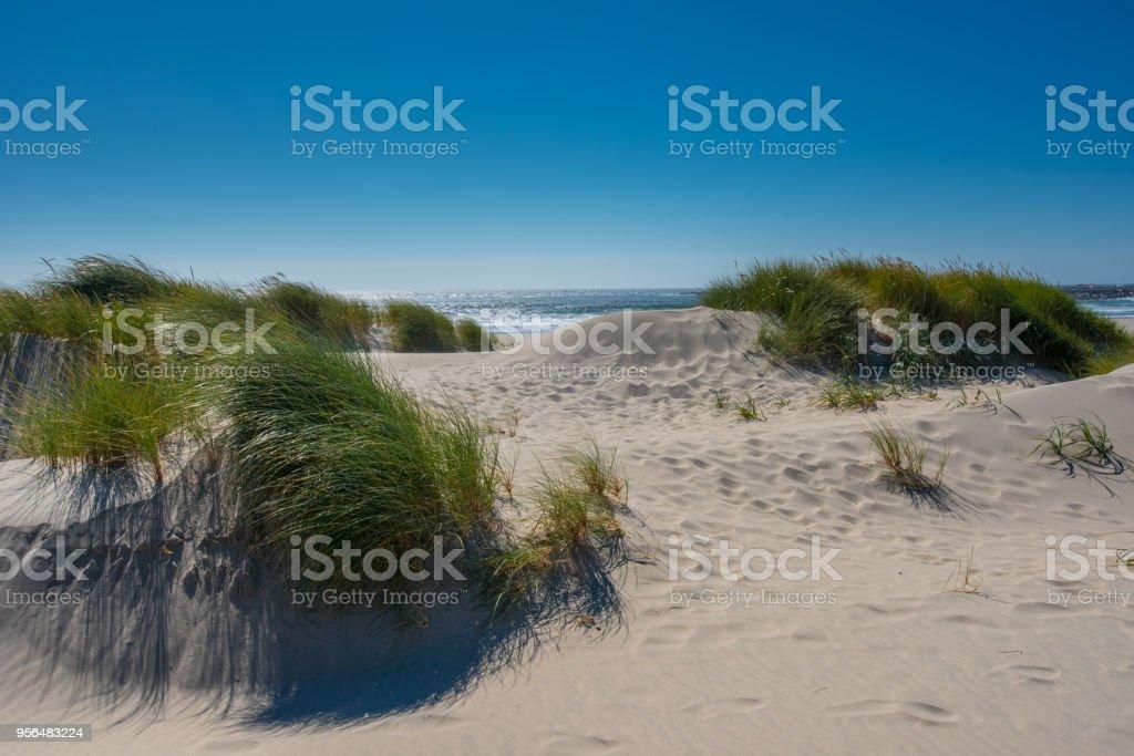 Sand Dunes Look Over Pacific Ocean stock photo