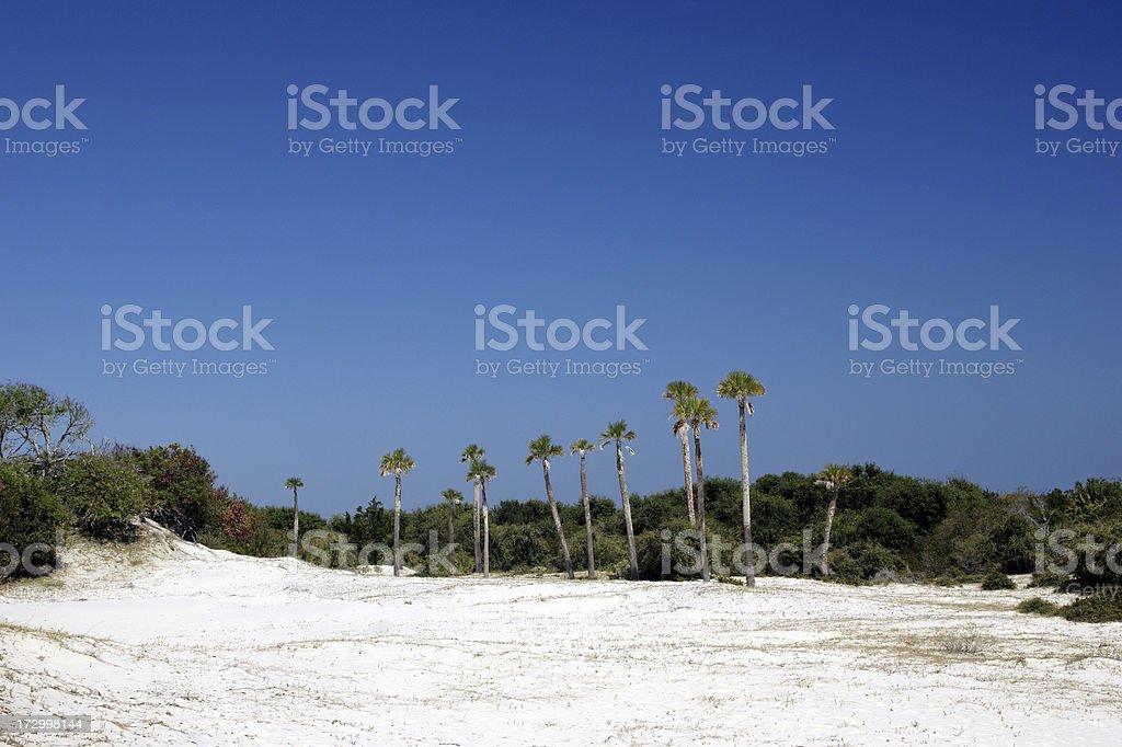 Sand Dunes of Cumberland Island Georgia royalty-free stock photo