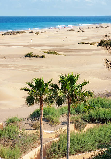 Dunas de arena de Maspalomas. Gran Canaria. Islas canarias - foto de stock