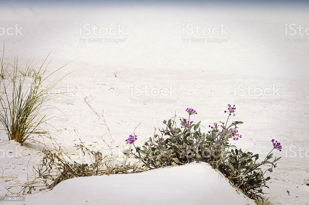 sand dunes of White Sands royalty-free stock photo