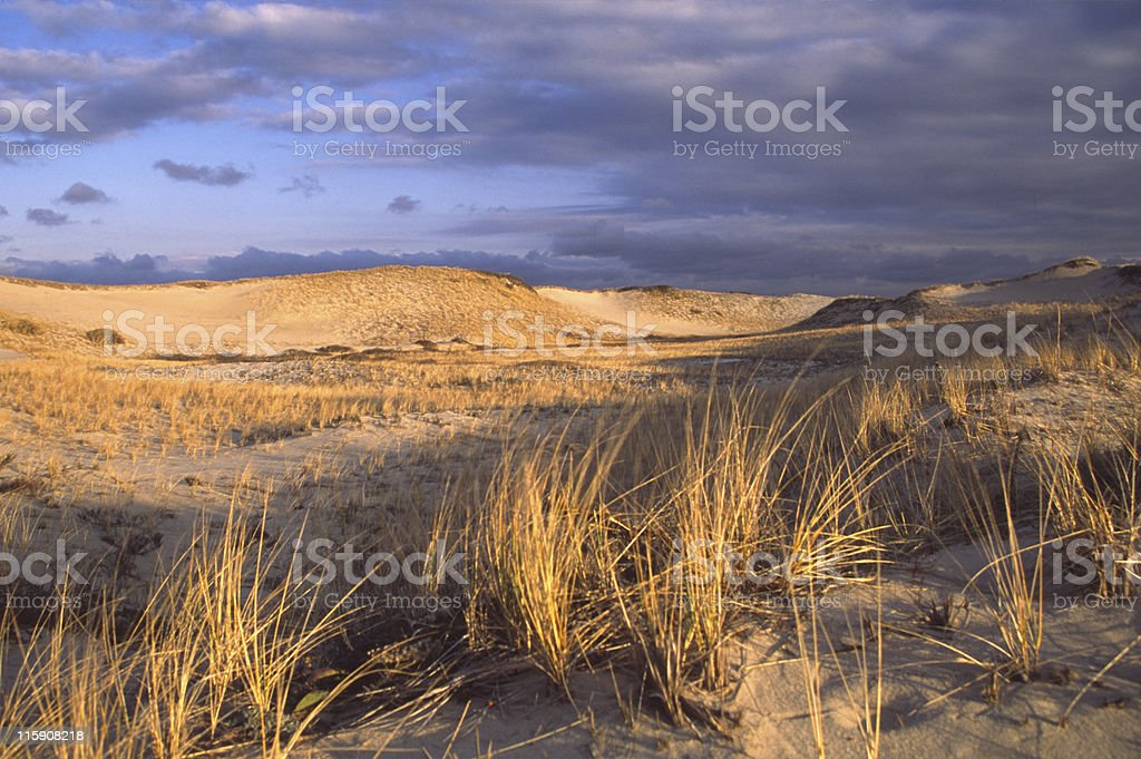 Sand Dunes on Cape Cod royalty-free stock photo