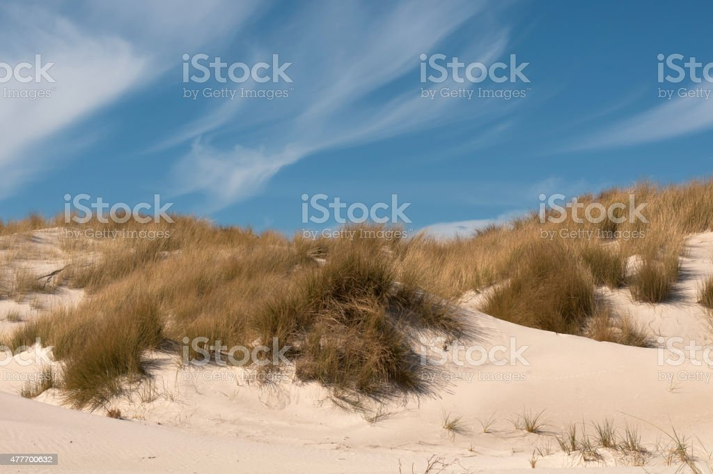 Sand dunes on the North Sea with blue sky. stock photo