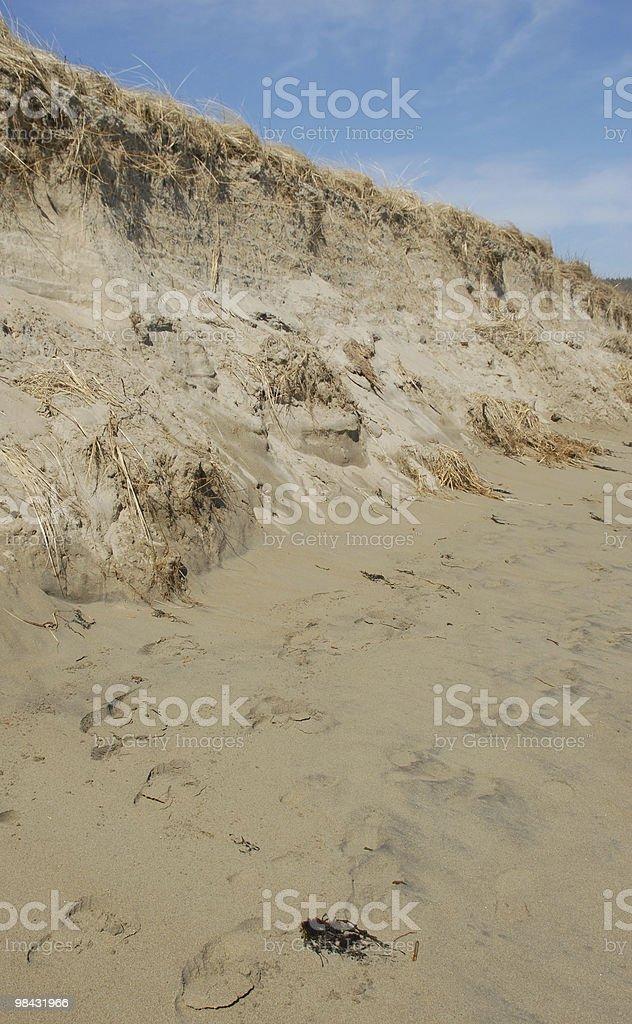 Sand dunes rises along a New England beach royalty-free stock photo