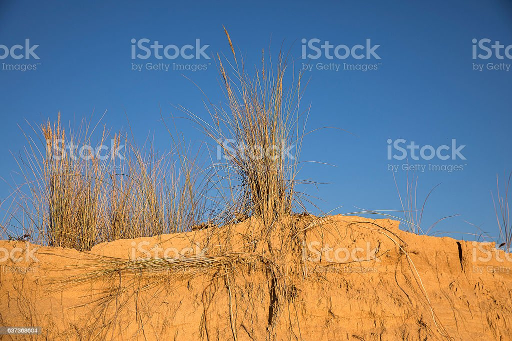 sand dunes with golden sand and beach grass stock photo
