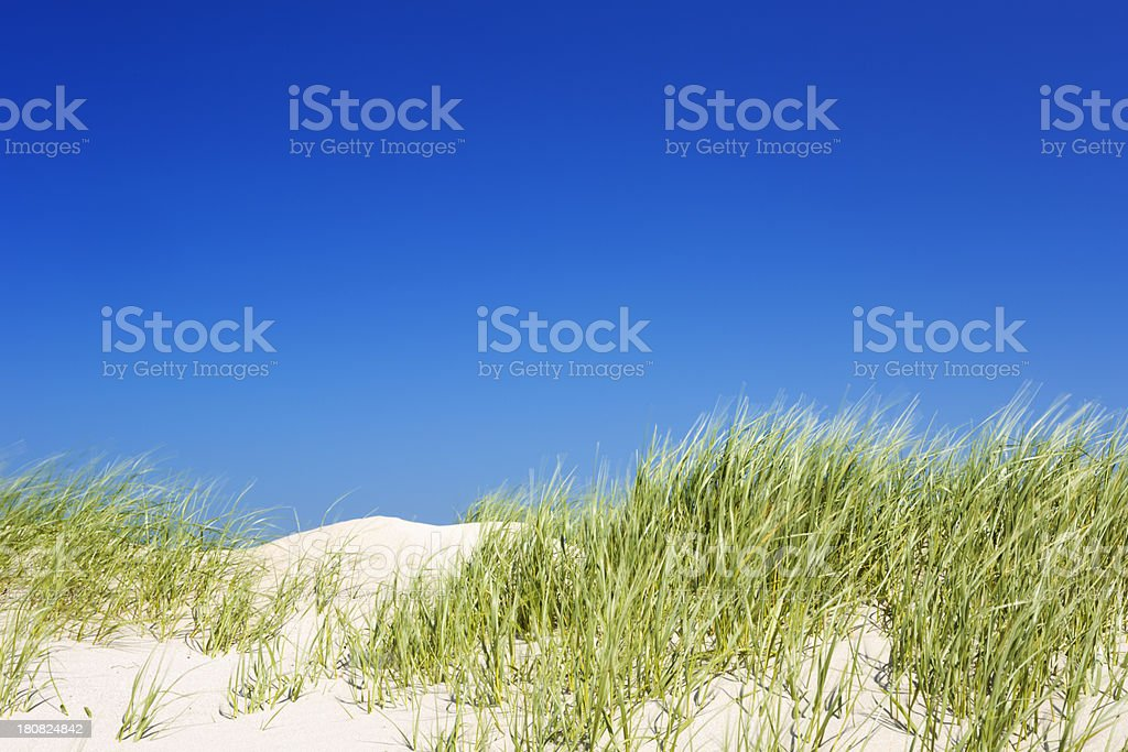 Sand dunes with grass on a clear day royalty-free stock photo