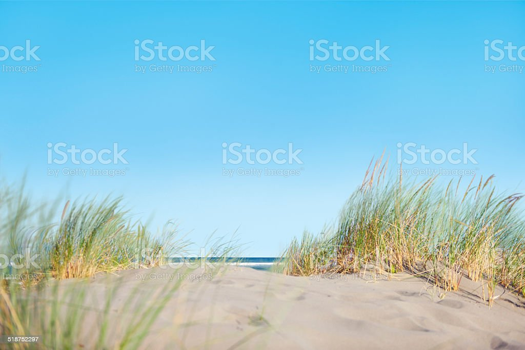Sand Dunes with Grass on the Beach stock photo